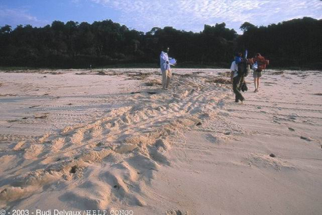 Trace of luth turttle coming to lay on the beaches of the Park of Conkouati-Douli